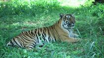 Bannerghatta National Park Private Day Tour with Butterfly Park and Safari from Bangalore, ...
