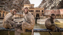 Full day Private Jaipur Tour with Monkey Temple and camel Ride, Jaipur, Nature & Wildlife