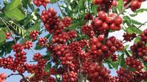 Private Coffee Tour from Huatulco, Huatulco, Coffee & Tea Tours