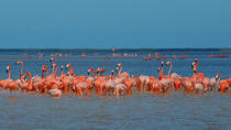 Private Tour: Ek Balam, Pink Flamingos Sanctuary and Tequila Tasting Factory from Cancun, Cancun, ...