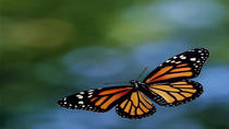 Private Tour to the Monarch Butterfly Sanctuary from Mexico City, Mexico City, Day Trips