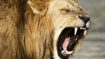 Big Cat Safari Kenya and Tanzania, Arusha, Cultural Tours
