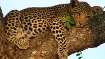Classic bush safari adventure, Arusha, 4WD, ATV & Off-Road Tours