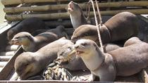 Experience Otter Fishing in 2 Days Tour, Dhaka, Full-day Tours