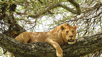 3-Day Safari Tour to Tarangire National Park, Lake Manyara National Park and Ngorongoro Crater from ...