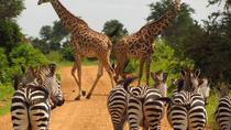 3 Days - MIKUMI NATIONAL PARK from Dar es laam, Dar es Salaam, Multi-day Tours