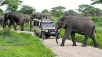 3 days - Wildebeests Safari to Tarangire NP Ndutu Area Olduvai and Ngorongoro Crater, Arusha,...
