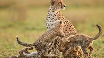 5 Days - Tanzania Wildlife Safari, Arusha, Cultural Tours
