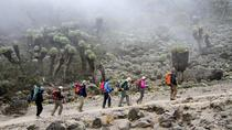 7-Day Mount Kilimanjaro Trek Via Machame Route From Arusha , Arusha, Climbing