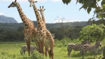 ARUSHA NATIONAL PARK, Arusha, Nature & Wildlife