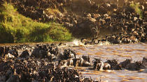 Backpackers Safari: 5-Day Guided Tour from Arusha, Arusha, Multi-day Tours