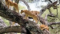 LAKE MANYARA NATIONAL PARK, Arusha, Multi-day Tours