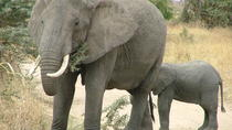 Tarangire National Park: Guided Day Tour from Arusha, Arusha, Day Trips