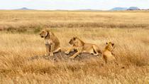 2 Days Safari From Arusha Town, Tanzania , Arusha, Overnight Tours
