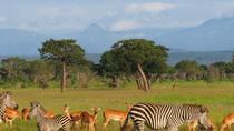 2-Night Mikumi National Park Safari from Dar es Salaam, Dar es Salaam, Multi-day Tours