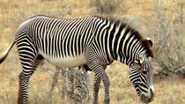 3 Days safari in Selous game reserve, Dar es Salaam, Day Trips
