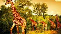 5 Days Safari In Tarangire, Lake Manyara, Ngorongoro and Serengeti NP From Arusha Town , Arusha, ...