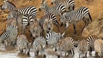 Full-Day Safari in Tarangire National Park in Tanzania, Arusha