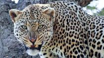 14-Days Bush to Beach Holiday From Arusha: Tarangire National Park, Lake Manyara and Ngorongoro, ...