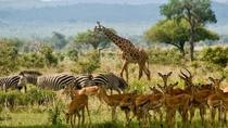 2 Days guided tour to Mikumi National Park from Dar Es salaam, Dar es Salaam, Multi-day Tours