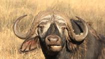 4-Day Wildlife Adventure from Arusha: Lake Manyara, Serengeti and Ngorongoro Crater, Arusha, ...