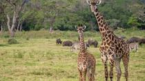 Full- Day Arusha National Park Safari from Arusha, Arusha