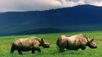 Full-Day Day Trip to Ngorongoro Crater From Arusha Town, Arusha