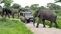 Full-Day Safari to Tarangire National Park from Arusha, Arusha, Safaris