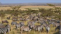 Great Serengeti Migration Trail, Arusha, Multi-day Tours