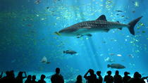 2-Day Madame Tussauds Bangkok and SEA LIFE Bangkok Ocean World Admission Tickets, Bangkok