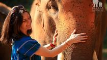 Full-Day Patara Elephant Farm Experience from Chiang Mai, Chiang Mai, Eco Tours