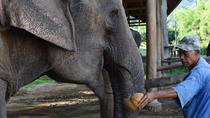 Half-Day at Thai Elephant Care Camp Mae Sa in Chiang Mai, Chiang Mai, Half-day Tours
