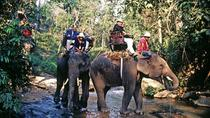 Koh Samui Full Day Mountain Safari and Elephant Trek, Koh Samui, Half-day Tours