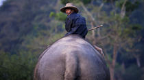 Private Lampang Elephant School and Lamphun Temples Tour from Chiang Mai, Chiang Mai, Day Trips