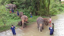 Tong Bai Elephant Foundation Day Trip from Chiang Mai, Chiang Mai, Day Trips