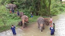 Tong Bai Elephant Foundation Day Trip from Chiang Mai, Chiang Mai, Day Trips