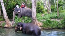 Elephant Trekking in the Jungle of Krabi, Krabi, Nature & Wildlife