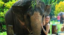 Krabi Sanctuary - A New Home For Overtired , Krabi, Cultural Tours