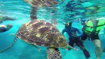 Snorkeling Day Trip at Similan Islands by Speed Boat from Krabi, Krabi, Snorkeling