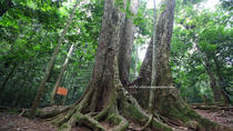 Cuc Phuong National Park Day Tour from Hanoi, Hanoi
