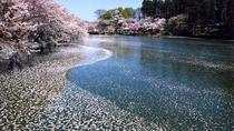 Cherry Blossom and Snow Monkey Day Trip from Nagano, Nagano, Half-day Tours