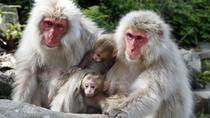 Snow Monkey and Shiga-kogen Highlands Hiking Day Tour, Nagano