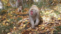 Walking and Cycling Day Tour in Nagano to Visit the Snow Monkeys, Nagano, Full-day Tours