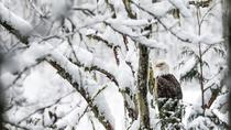 5-Hour Eagle Viewing River Float Trip From Whistler with Lunch, Squamish