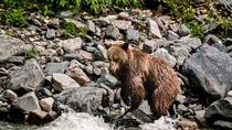 6-Day Babine River of Grizzlies Expedition, Prince Rupert, Multi-day Tours