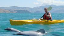 Kayaking Safari mit Meerestiere in Akaroa, Akaroa