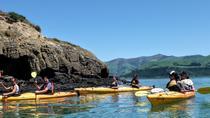 Shore Excursion: Scenic Cruiser Sea Kayaking Safaris in Akaroa, Akaroa, Ports of Call Tours