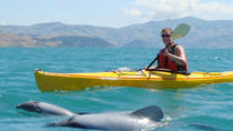 Sunrise Kayaking Safari with Sea Wildlife in Akaroa, Akaroa, Kayaking & Canoeing