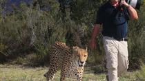 Sunrise Cheetah Combo, Garden Route, Photography Tours