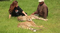 Wild Cat Animal Keeper for the Day and Tour, Garden Route, Day Trips